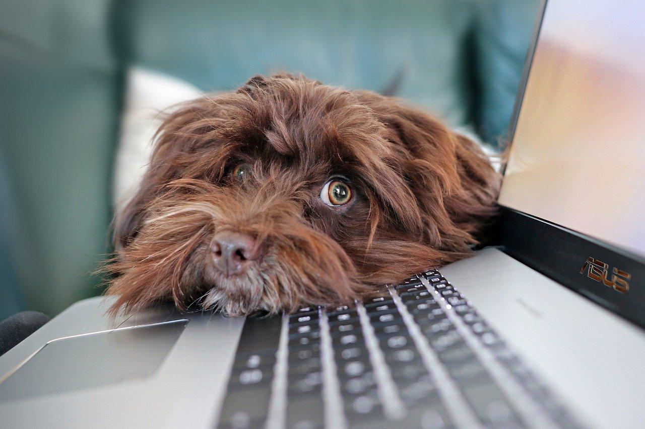 dog, containment, telework