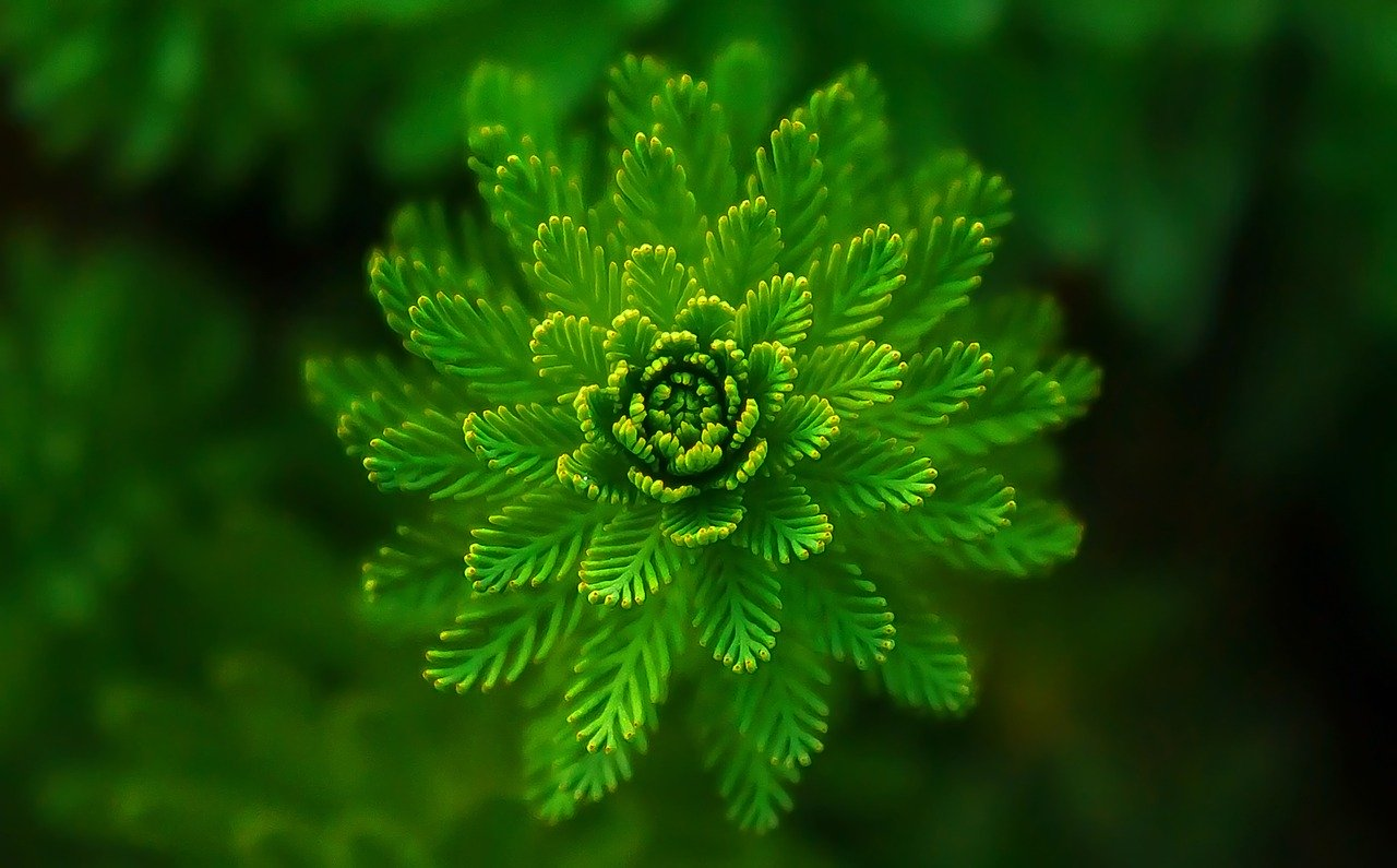 fern, leaves, green