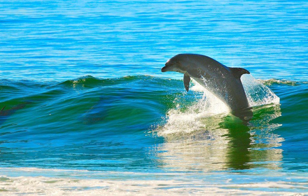 イルカ,海,波