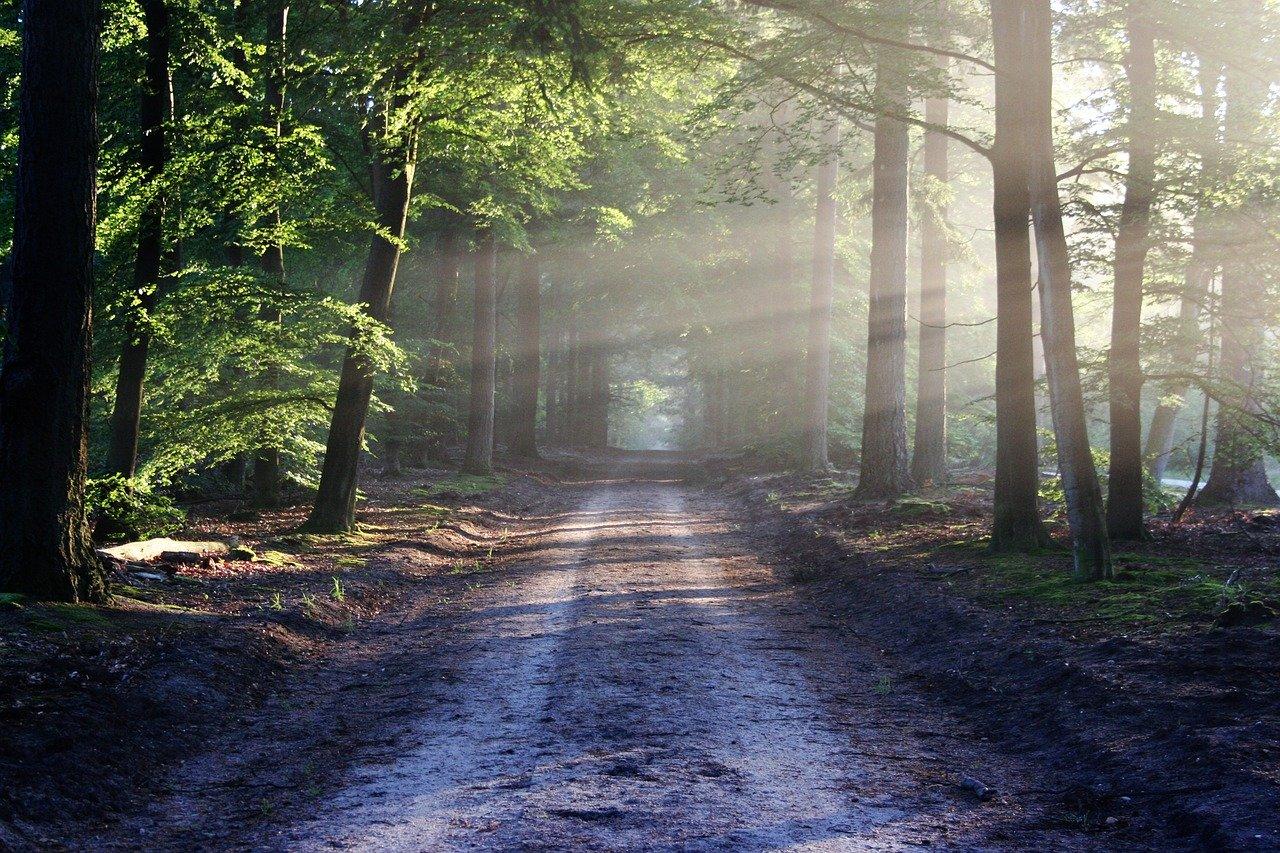 the road, beams, path